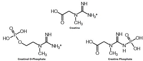 creatine o phosphate creatinol o phosphate scientific review on usage dosage