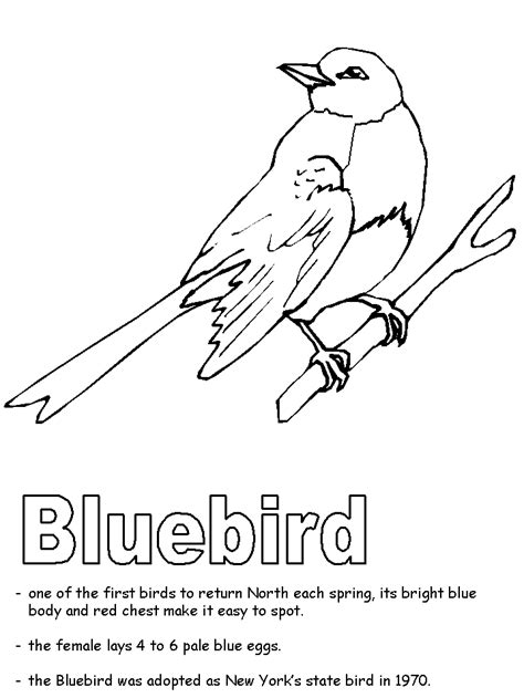 bluebird coloring pages preschool bluebird coloring page