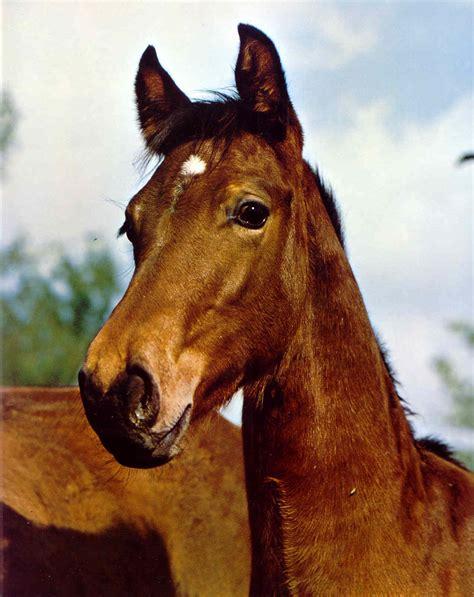 pferdebilder  pferde auf der weide koppel