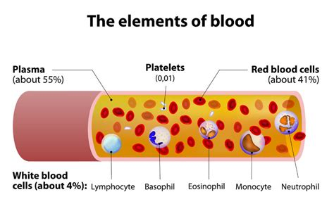 blood cells diagram components of blood study guide alyvea