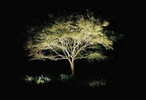 outdoor lights on trees light up the rock design llc