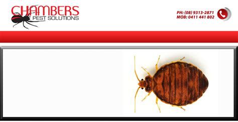 bed bug company how to find the best bed bug control company