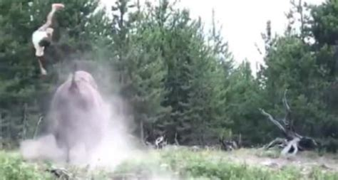 bison throws young girl  air  charging