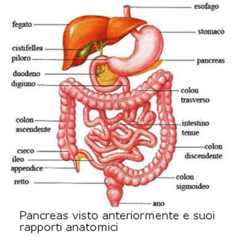 dieta alimentare per diverticoli intestinali della dieta pancreas la dieta gruppo sanguigno 0