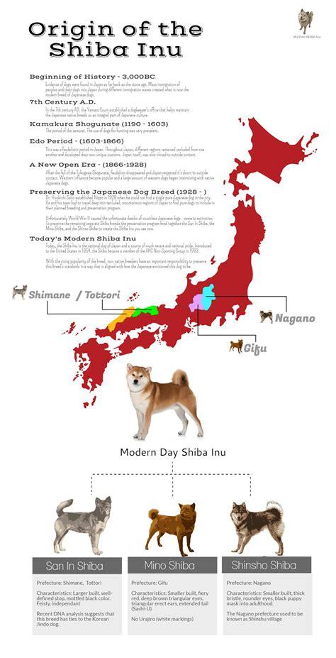new year origin and history shiba inu history and origins my shiba inu