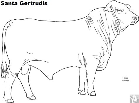 realistic cow coloring page breed coloring pages santa gertrudis