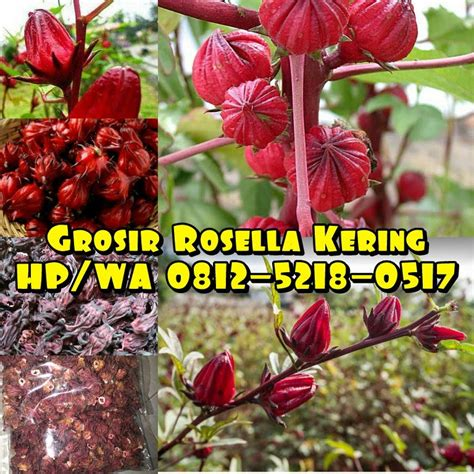 Teh Herbal Rosella Merah teh herbal rosella ungu pemasok teh rosella hp 081252180517