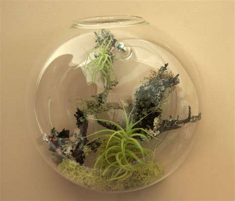 Air Plant Vases by Wall Vases With Air Plants Shelterness