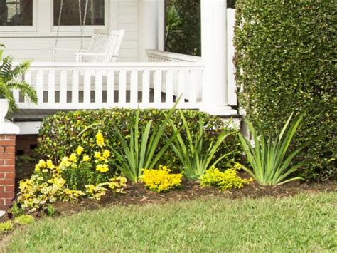 curb appeal plants photo page hgtv