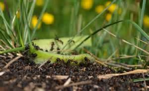 anti fourmis naturel et r 233 pulsif