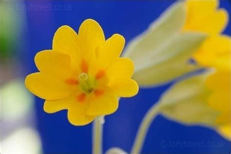 conoscere i fiori conoscere i fiori di co piante fiori di co 10