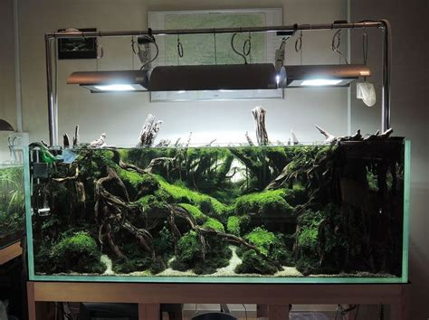 aquascaping layouts 17 best images about aquascape layout inspiration on