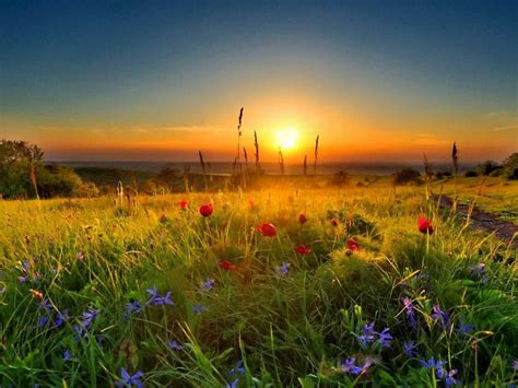 meadow green grass  red poppies sunset wallpaperscom