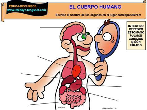 imagenes sorprendentes cuerpo humano organos del cuerpo humano