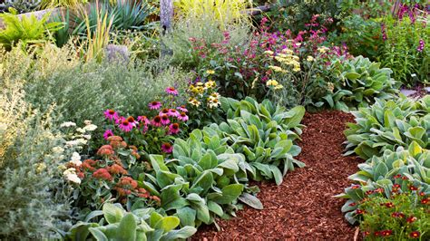 plant beds easy care fall plants for your garden sunset