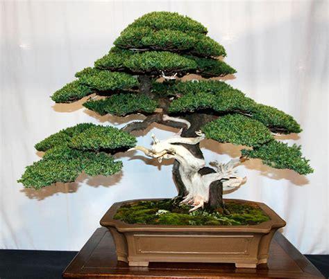vasi bonsai cinesi acquista all ingrosso albero bonsai vasi da