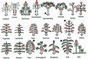 Charmant Periode Elagage Des Arbres #2: figure-9-page-31_resize.jpg
