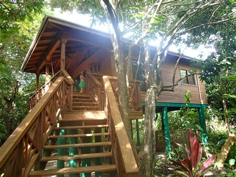 tree house layout at belize treehouses belize tree houses deluxe tree house picture of hamanasi adventure and dive