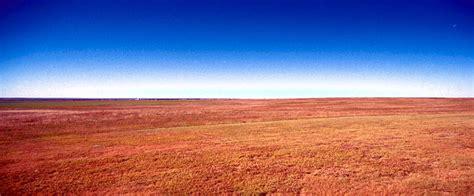temperate grasslands home