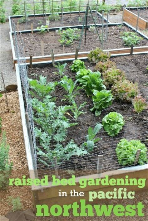 pacific nw raised garden bed gardens raised beds and raised bed gardens