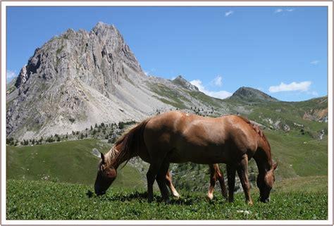 foto animali da cortile cavalli foto immagini animali animali domestici e da