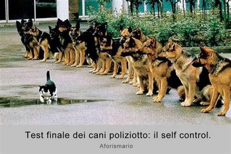 i cani testi aforismario 174 cani e gatti a confronto frasi canine e feline