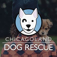 puppy rescue chicago chicagoland rescue animal rescue news