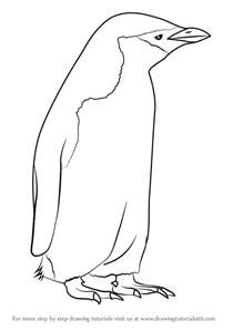 learn how to draw a chinstrap penguin antarctic animals step by step drawing tutorials