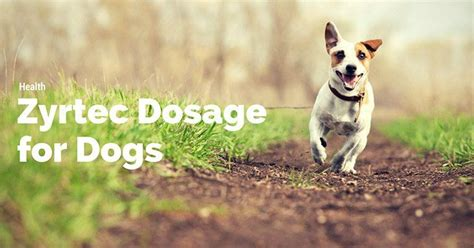 cetirizine dosage for dogs zyrtec dosage for dogs how to do it correctly