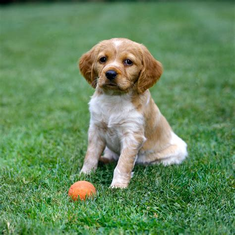 playful puppies image gallery playful dogs