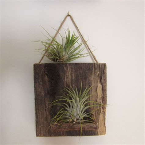 wall plant holders reclaimed wood air plant wall holder