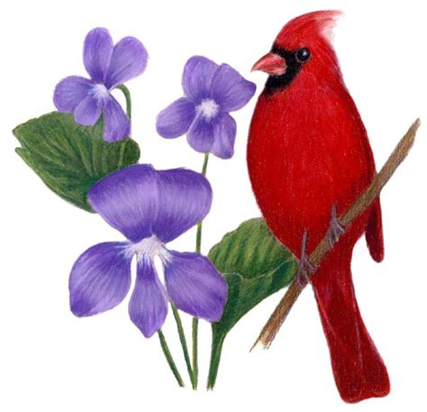 state flower of illinois illinois state bird and flower cardinal cardinalis