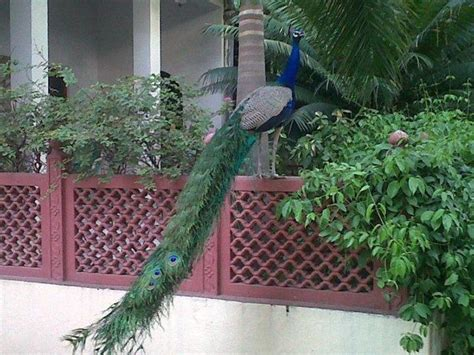 peacock garden shahar palace the peacock garden in jaipur india lonely