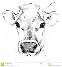 pencil drawings of cows drawing pencil