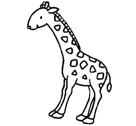 imagenes de jirafas faciles de dibujar dibujo de jirafa 2 para colorear dibujos net