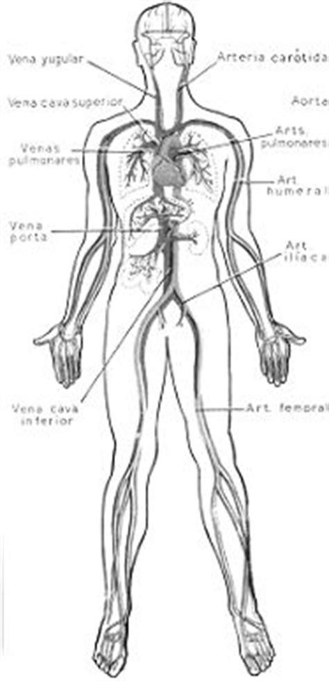 anatomia y fisiologia circulacion sangre venas