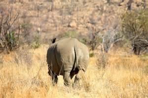Photo essay pilanesberg amp lion park safaris turf to surf