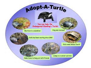 pin turtle names in different languagesjpg wikipedia the