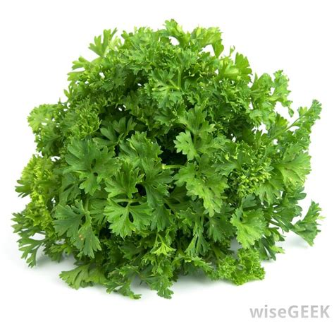 what is italian parsley with pictures