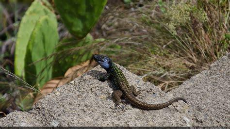 dome reptile l reptile