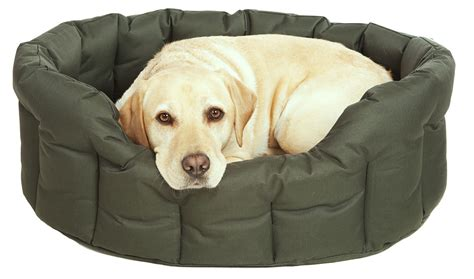 dog on bed heavy duty waterproof dog bed from easy animal
