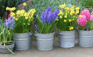 Potted Flowers Guest Flower Bulb Forcing Willard And May Outdoor