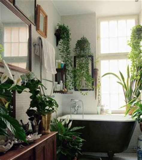 bathroom hanging plants dream bathroom hanging houseplants ivy cordatum