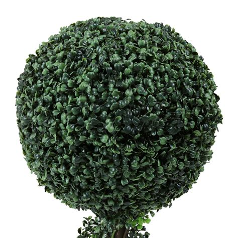 buxus topiary trees charles bentley pair of 3ft boxwood buxus topiary