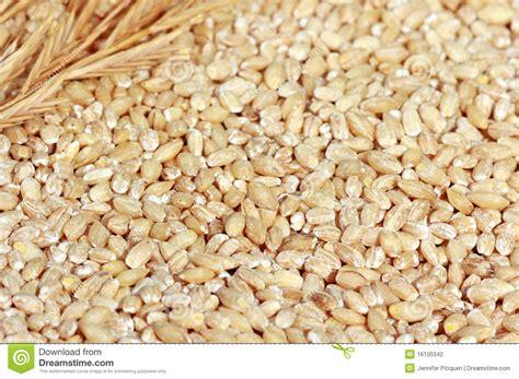 Hulled Barley hulled barley stock photography image 16100342