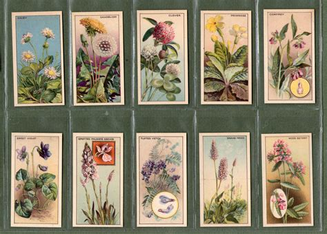 Gift Card Pack - tobacco cards set cigarette cards 1928 wayside flowers rare