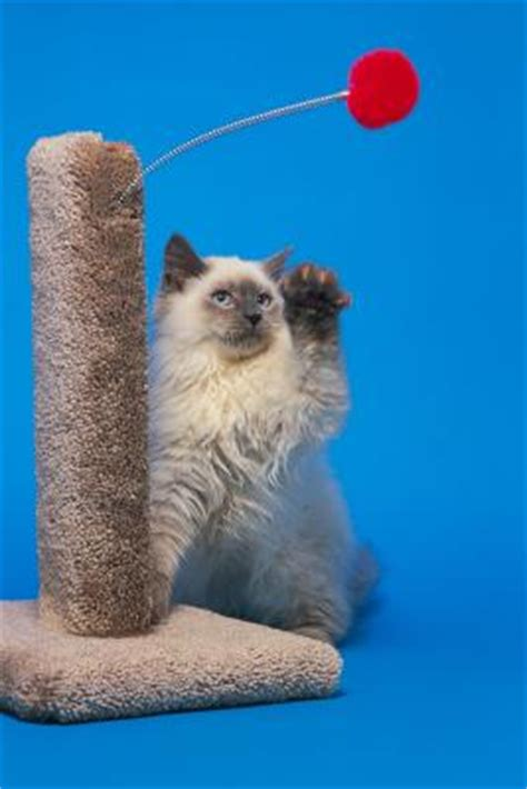 Home Remedies To Stop Cats From Scratching Furniture by How To Stop Cats From Scratching Furniture With A Home