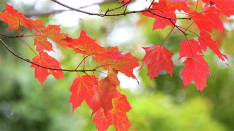 fall leaf colors fall leaf color starting to emerge duluth news tribune