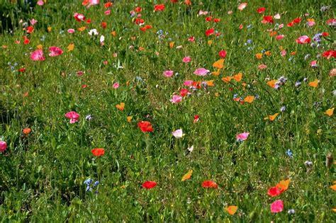 prato fiorito trucchi 500px fujifilm global photo walk a chamois associazione