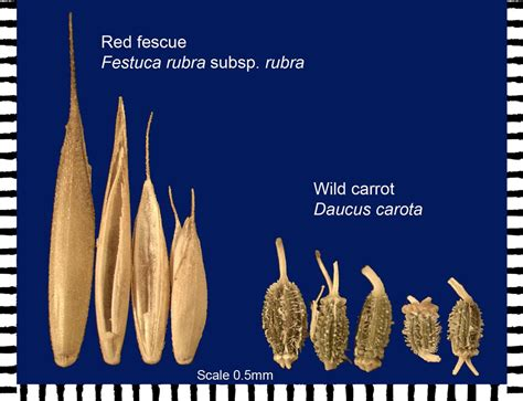 seed sizes custom digital imaging seed laboratory oregon state